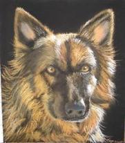Pet Portraits - A German Shepherd In Pastel